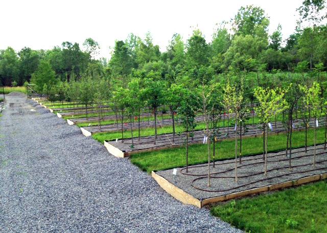 Rare Earth Nursery's Missouri Gravel Beds.