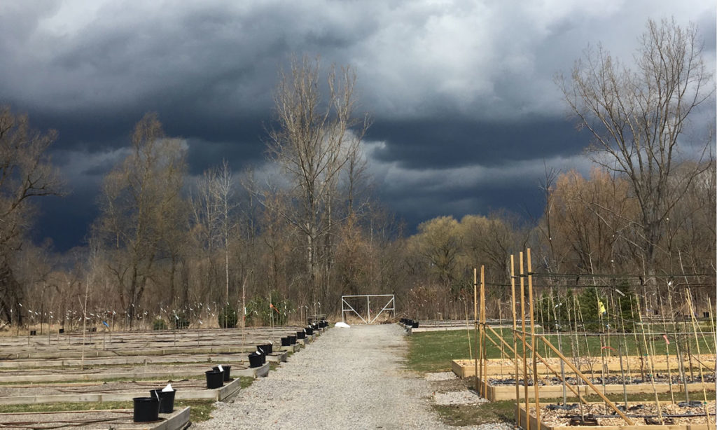 Rare Earth Nursery and April storm clouds